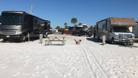 Dogs aren't allowed on the beach but the sand extends to the campground