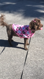 Coco with her new sweater