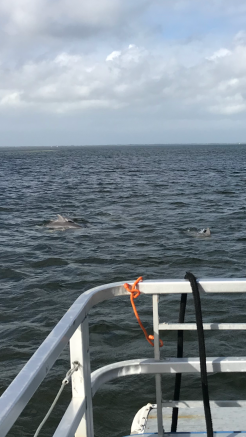 Dolphins playing in the water