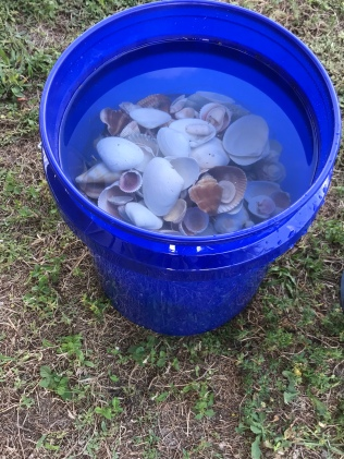 One of two buckets of shells