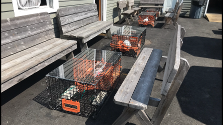 Only in Maine are the tables lobster traps.